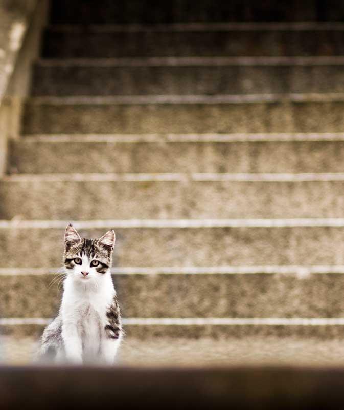 veronica_perez_granado_photography_periodista_fotografa_MADRID_sin_cielo_Street_urban_o