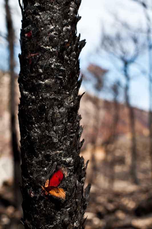 veronica_perez_granado_photography_periodista_fotografa_INCENDIOS_Ij